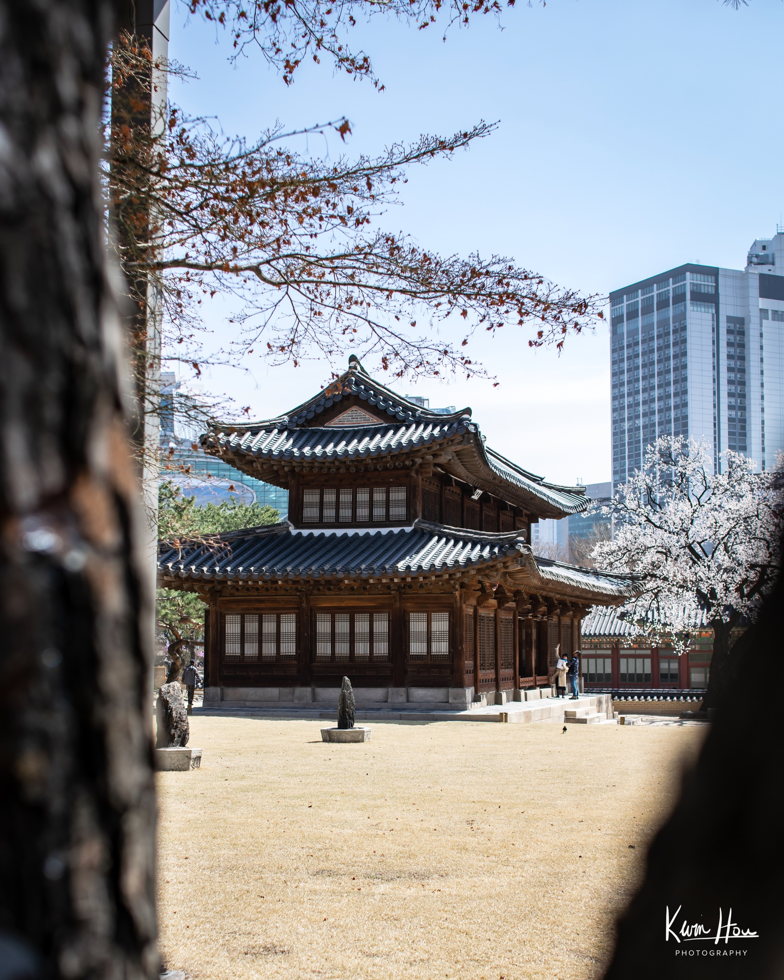 Korea Palace Through Trees