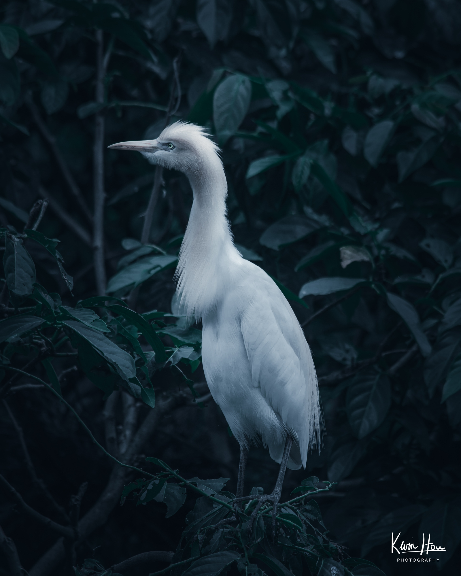 Taipei Park Bird Watching Dylan Fursty Dark Edit White Bird